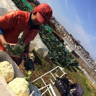 【新鮮食材】オーナー自らが栽培する鎌倉野菜