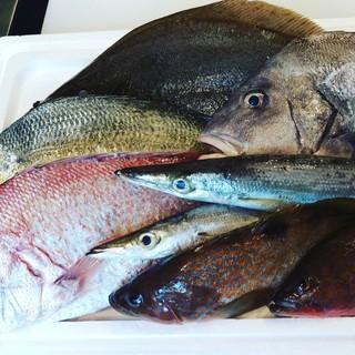 長崎県島原市直送鮮魚