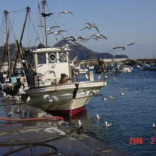 漁港直送!新鮮な獲れたてぴちぴちなお魚を提供します!