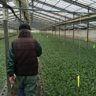 野菜も全国の生産者さんから集めた旬野菜!