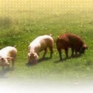 天然由来の混合飼材「かみふらの滋養豚」