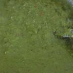 スパイスキング - 添えられたスパイス(緑)