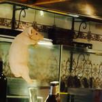 63415479 - 仔豚が厨房覗いてます