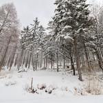 仙人小屋 - 雪景色☆