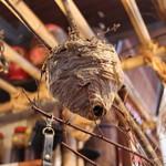 仙人小屋 - 蜂の巣☆