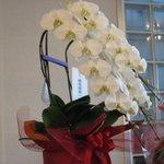 6363701 - 店主の修行先である「銀座 楼蘭」から贈られた蘭の祝花