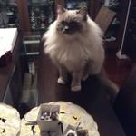 63946331 - ショコラとレオン(猫)