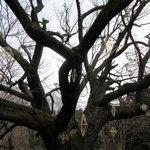 山小屋 佐藤 - 庭の桜の樹にフィンランドの伝統装飾「ヒンメリ」