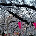 ちゃんこ屋 鈴木ちゃん - 目黒川すぐ近くです*桜