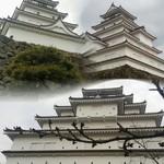 64306621 - 東京開花宣言の今日、お城のツボミはまだ固そうでした
