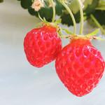 いちごShop 大樹 - 料理写真:いちご