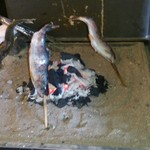 そば 祖谷美人 - 岩魚も焼けてます