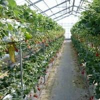 澤田農園-プライベート農園
