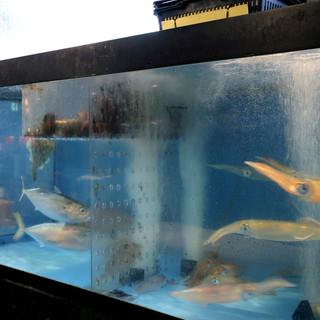 呼子港で水揚げされたイカの活き造りやなど、鮮魚が満載!