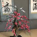 茶庵 芙蓉 - 床の間には掛け軸やお花が。