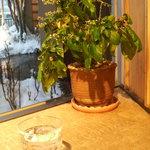 草津 片岡鶴太郎美術館 カフェコーナー - 観葉植物