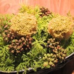 イレテテュヌフワ - 蕗の薹のケーキ
