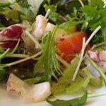 6498360 - 無農薬野菜サラダ