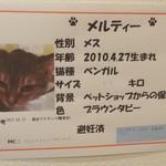 保護犬カフェ -