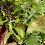 炭焼き&ワイン ドリフト - ほろ苦い、デトックスサラダ。大分の農家さんから届く、無農薬栽培のミックスリーフです
