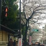 レストラン ラグー - 靖国神社の桜並木