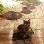 oasi - 毛並みが綺麗で気品がある黒猫ちゃん♥
