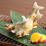 寿庵忠左衛門 - 季節の単品料理『鮎の塩焼』、長良川の天然鮎を塩焼きに。
