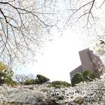 ル・ジャルダン - 桜が咲く庭園を一望するラウンジで桜づくしのひとときを