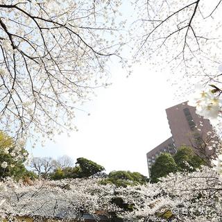 桜が咲く庭園を一望するラウンジで桜づくしのひとときを