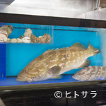 桃兵衛 - 「幻の魚」を堪能できる『クエ鍋』