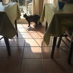 カフェ&レストラン ビオラ - このコは人懐っこすぎて近くだと撮れない
