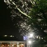 美福苑 - 日が暮れてますます鮮やかになってきた桜