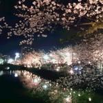 65270648 - お堀の桜