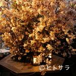 さくら - テラス席は、春には桜が満開。まさに、絶景です