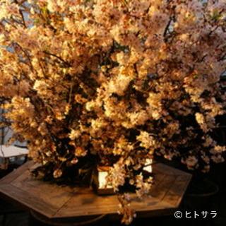 テラス席は、春には桜が満開。まさに、絶景です
