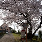 candy - 桜が満開