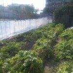 グラーフ ビーンズ - 自家栽培のお野菜を使っています。