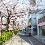 65394479 - 目前の五分咲きの美しい桜です