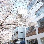 65394638 - 目前の五分咲きの美しい桜です