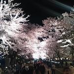 たいむ - 夜桜