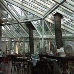 サクラマナーハウス ティールーム - 店内に巨木がにょきにょき