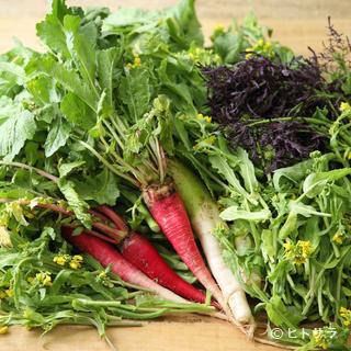 千葉農産の医農野菜など、バラエティは豊富な野菜を楽しめます