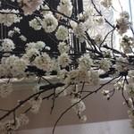 日本酒ダイニング ちえのわ - 桜の季節には、店内でお花見も出来ます