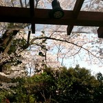 65474011 - テラス席からの桜