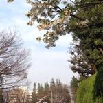 65475024 - 近くの世田谷公園は桜とこいのぼりの競演でした