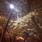 シェ・ソーマ - 都立大学遊歩道の桜