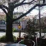 ティアラ - 葉桜になりました    本当に  本当に  桜の枝の真下の テラス席です