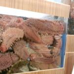 山陰漁港直送 うおはる - 座ったテーブル席の横にはグロな赤ナマコが(汗)