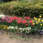 アシッドラシーヌ - 近くの公園で食べました。
