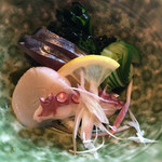 65521368 - 鯖・帆立・蛸・若芽・胡瓜 の 酢の物
